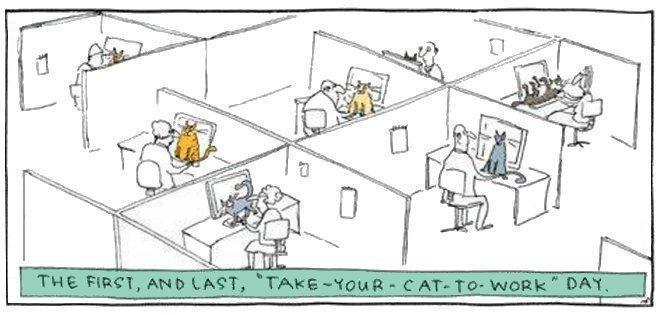 Cat to work day